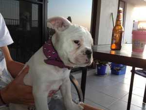 Kasey Murdoch's missing dog Baby.