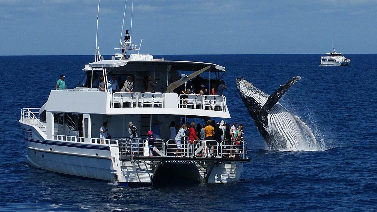 Hervey Bay whale watching.