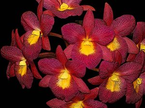 Learn about growing, sterilising and breeding orchids