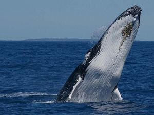 Whale permits in jeopardy if Bay operators don't toe line