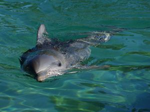 Bay dolphin feeding stirs comments