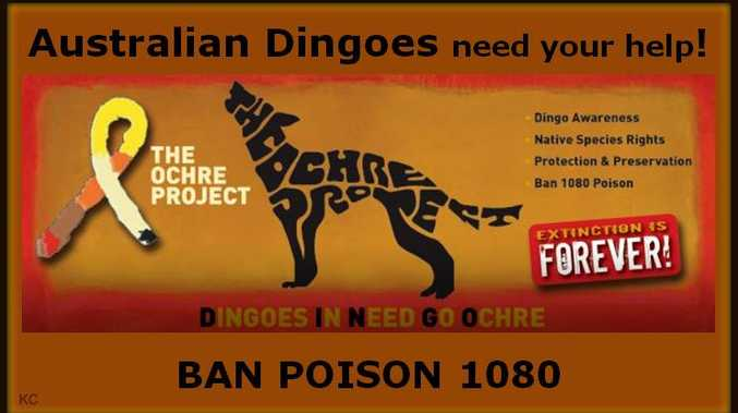 DINGO AWARENESS AND CHANGE: THE OCHRE PROJECT