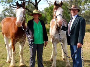 Adelaide Park Clydesdales at Ridgelands Show on weekend