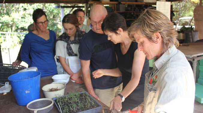 Virginia Seymour  Environment Coordinator North Coast, demonstrating propagating techniques to propagation workshop participants