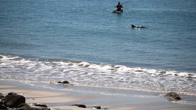 Dolphin mates