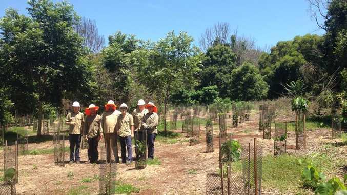 Green Army restore Big Scrub Rainforest