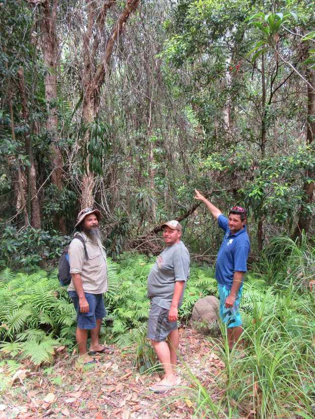 "From left - Sean Fleischfresser, Rodney Jones & Kerry Jones (Kabi Kabi Traditional Owners) point to ""Yur'ru"" - Supplejack vine scrub - Yaroomba Bushland Park"