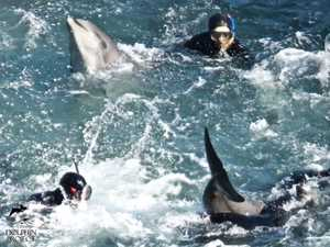 Japan unwilling to stop slaughter of whales, dolphins