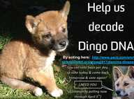 A proposal by a University of NSW scientist to study the DNA of a wild-born Australian desert dingo called Sandy has been announced as one of five finalists in the 'World's Most Interesting Genome' competition.  More than 200 International entries were received for the Pacific Biosciences SMRT Grant to sequence the complete genome of a particularly fascinating or important plant or animal.
