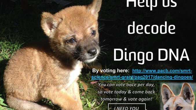 Sandy, the desert dingo needs your VOTE.
