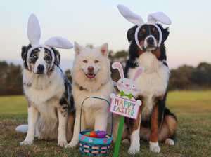 Keep the Family and Dogs Happy When Travelling these Easter Holidays