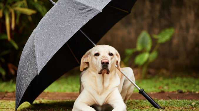 Dogs Queensland urges pet owners to keep dogs safe in the rain