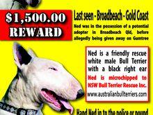 $1500.00 REWARD
