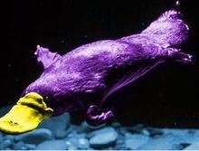 Purple Platypus Computer Training & Repairs