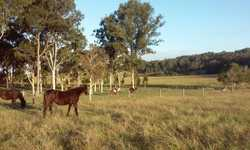Few will ever get to see a Sunshine Coast Hinterland Property of this calibre. This rural lifestyle...