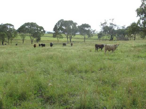 R488 - Beautiful soil within 10 minutes of Warwick CBD. Located just north of town, this 130 acres is...