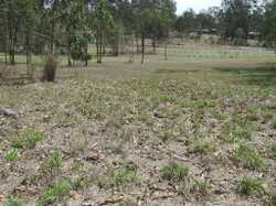 Stunning full pressure town water acreage block, selectively cleared, fenced on 3 sides. ready to bu...
