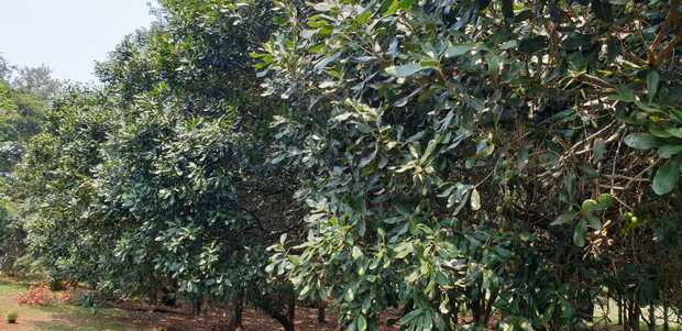 Perfect for someone wanting to grow macadamias,  fruit and vegetables to supply local markets for extra...