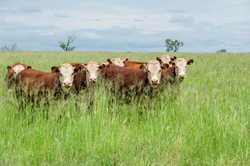 'Tandarra', 65 kms east of Goondiwindi, Queensland andbull;1,675* hectares (4,140* acres) across 13...
