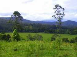 Just 15km out of Bellingen in the Kalang Valley, you will find one of the largest rural farming prop...