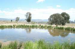 Located a little over 10km north from Tenterfield, sits this 97.83ha (240 acre) rural lifestyle prop...