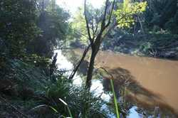 Watch the platypus play in the deep waterholes of Tinana Creek which forms a large part of the bound...