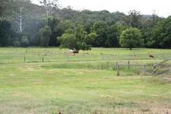 Located approx 40 kilometres from Gympie and only a few minutes drive from Kenilworth, this 358 acre...