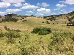 40 acres of rolling hills down to lush flats with your own babbling brook. All ex-small cropping cou...